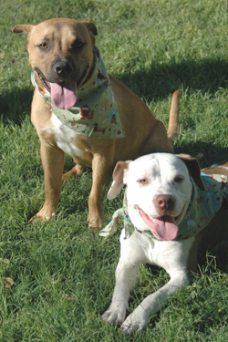 dogs of week 06-14-14-250