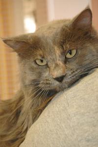 cat of week 10-11-14-200