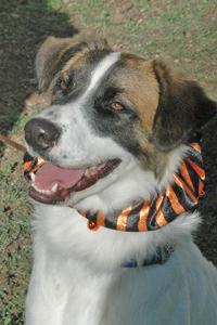 dog of week 10-11-14-200