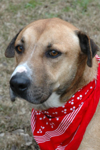 Dog of the week 01-03-15 orion