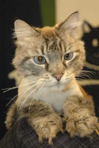 Cat of week 11-14-15 web