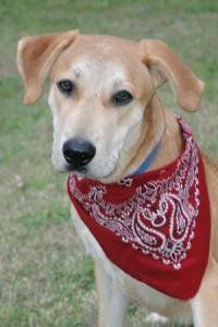Dog of week 11-14-15 web