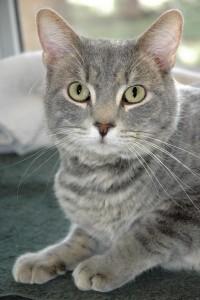 cat of the week 11-21-15 cooper