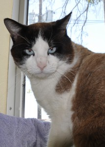gato 2-6-16 Canklefritz