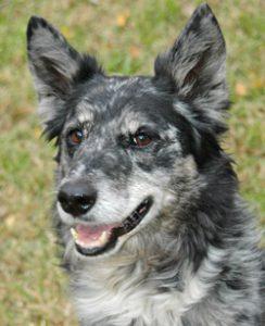 dog of week 12-01-12-250